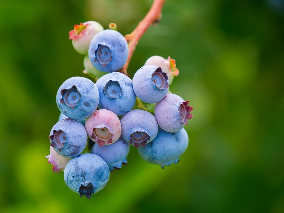 sadike borovnic
